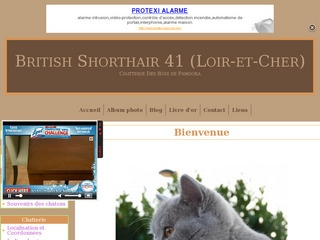 Chat British Shorthair dans le 41