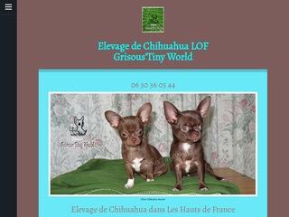 Elevage de Chihuahua LOF poil court
